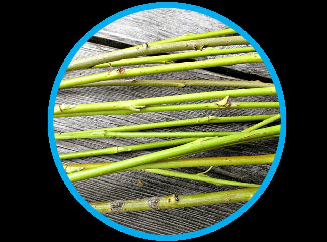willow-weaving2018